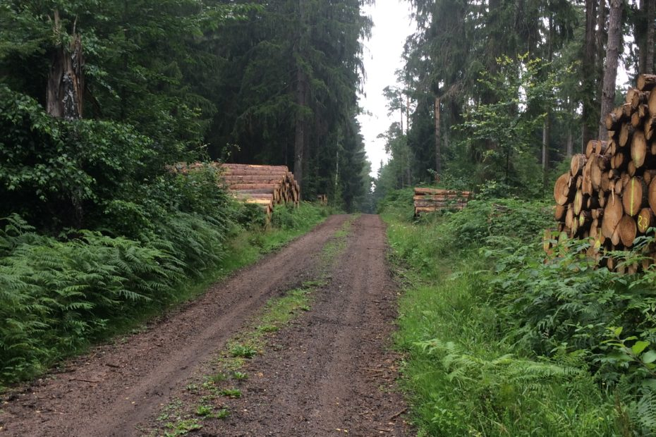 Tharanter Wald