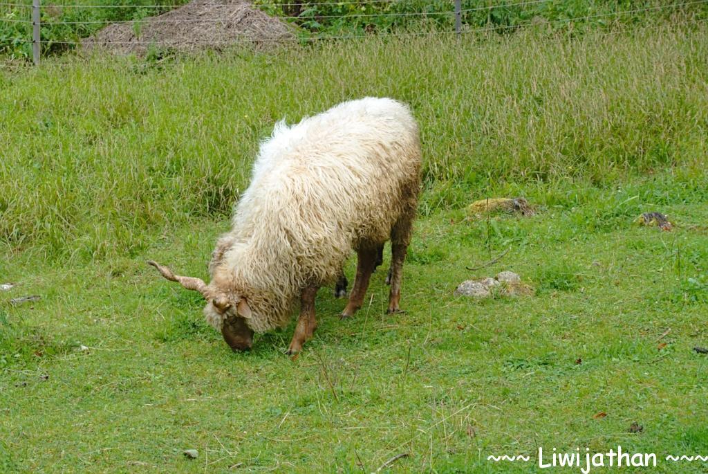 Slowakische Tierwelt
