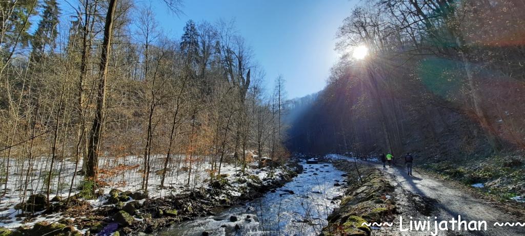 Tharandter Wald