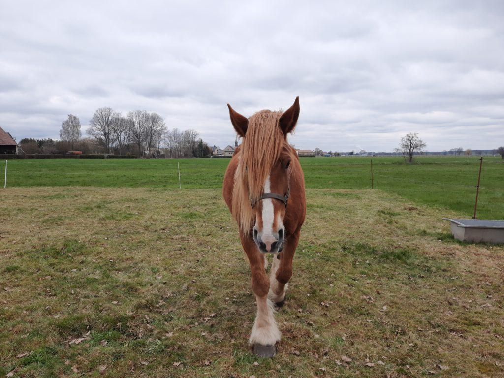 Pferd, falls man es nicht erkennt
